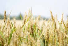 What to Eat on a Gluten-Free Diet