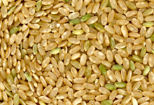 What's  All The Fuss About Brown Rice?